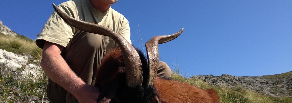 Vadkecske vadászat Mallorcán