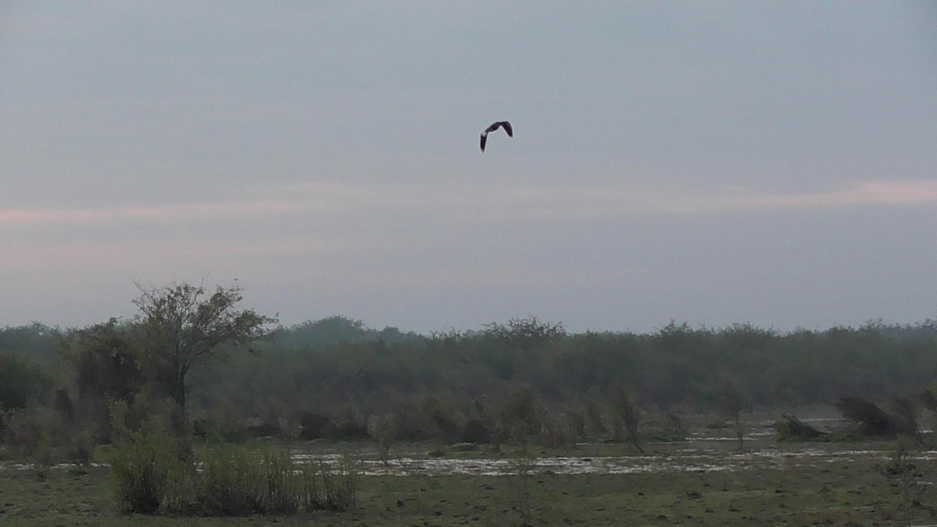 Argentína vadászat