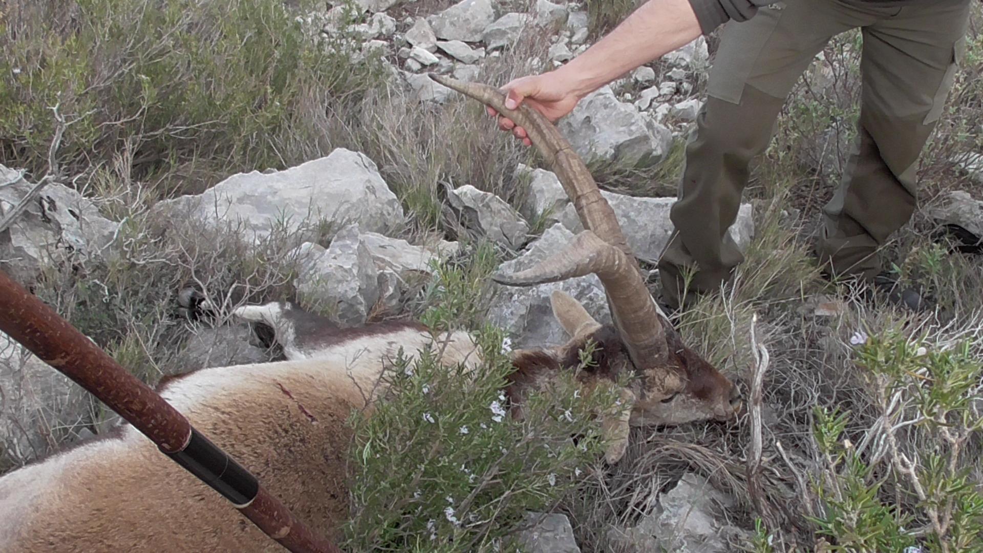 Spanyol vadászatok