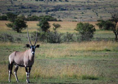 antelope-3325277_1920