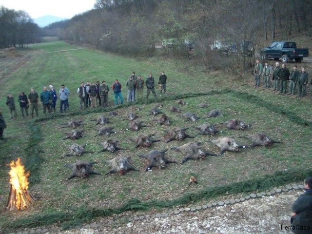 Vaddisznó vadászat