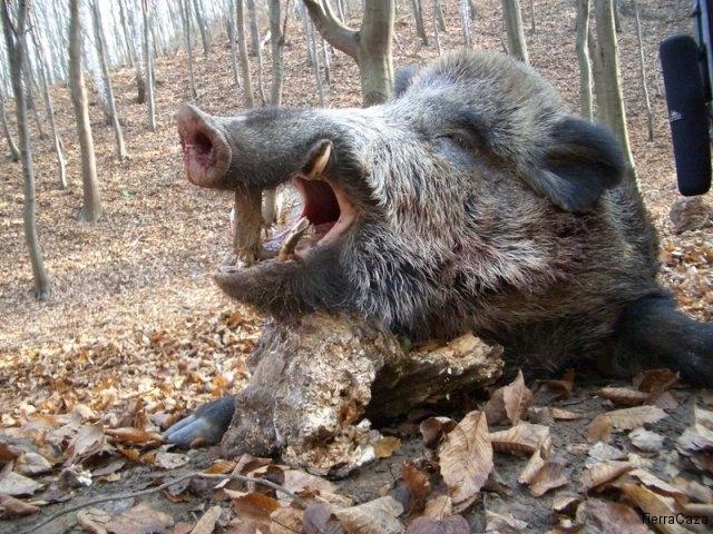 Tierra Caza caza en hungría