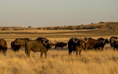 Afrikai vadászatok