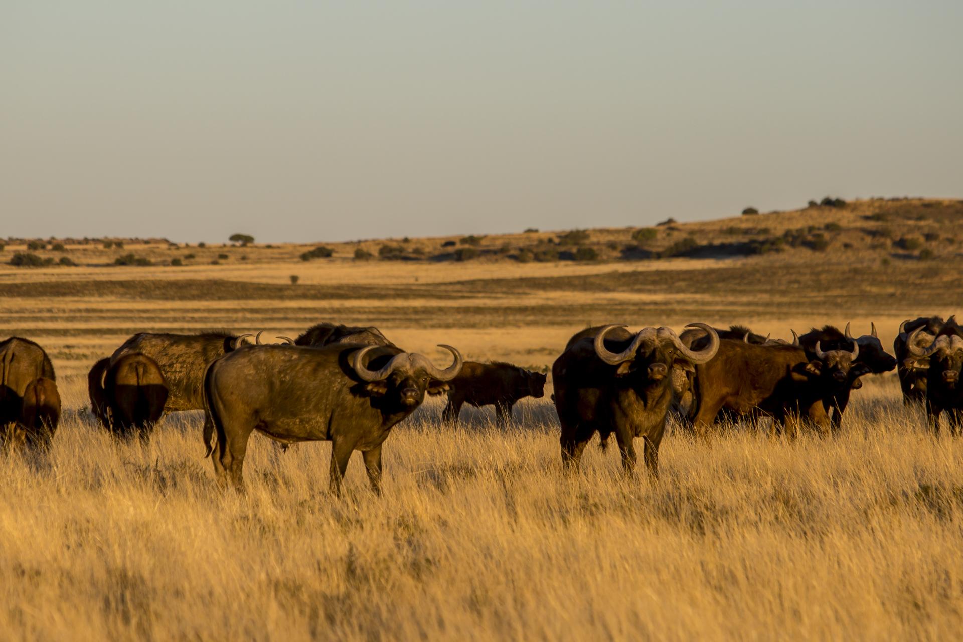 Dél- Afrika vadászat