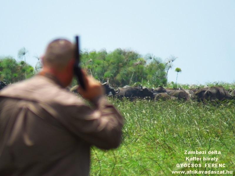 26Bivalyok vadász a rádió telefonnal