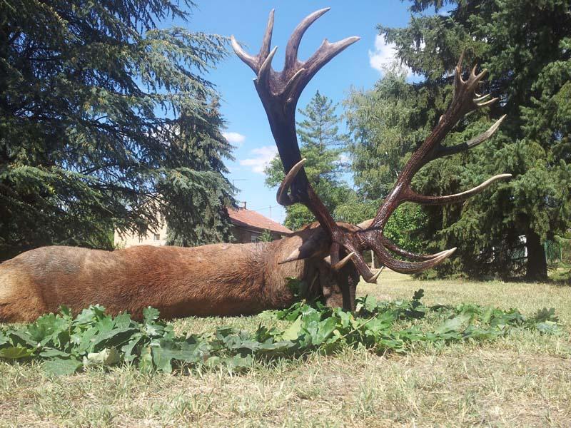 caza en Hungría