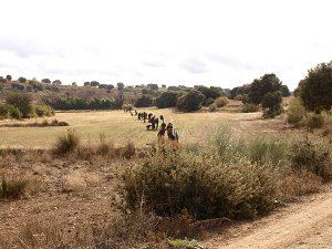 Partridge in Spain